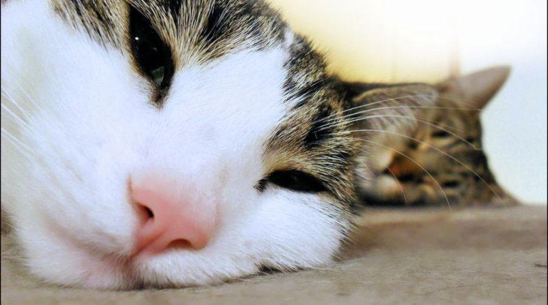 Votre chat s'ennuie ?