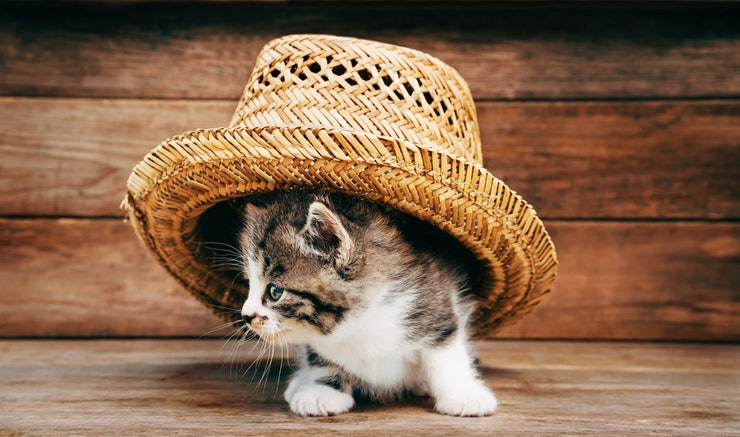 chapeau-gps-chat