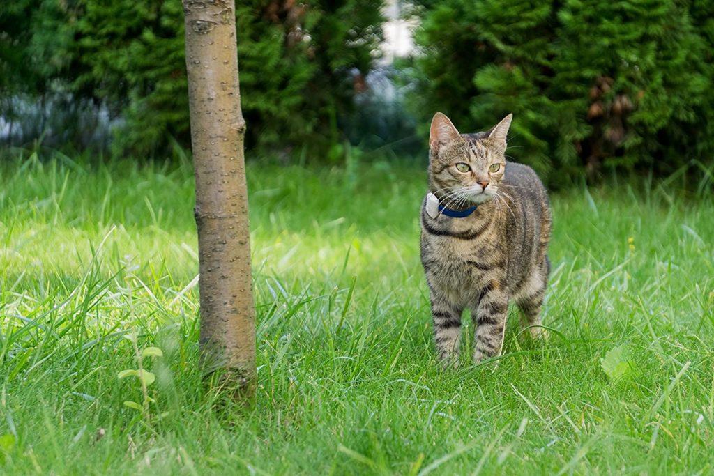 girafus-collier-localisateur-chat